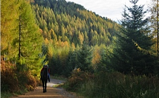 A walk at Aberfoyle
